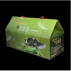 養生金線蓮茶包