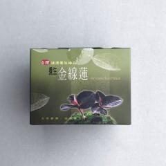 金線蓮茶包